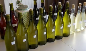 Tasting the vintage and discuss fermentation protocols for the 12 styles LEVIN produces