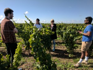 Vineyard walk in Bourre